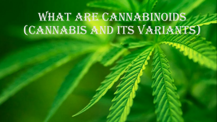 What are Cannabinoids (Cannabis and Its Variants)